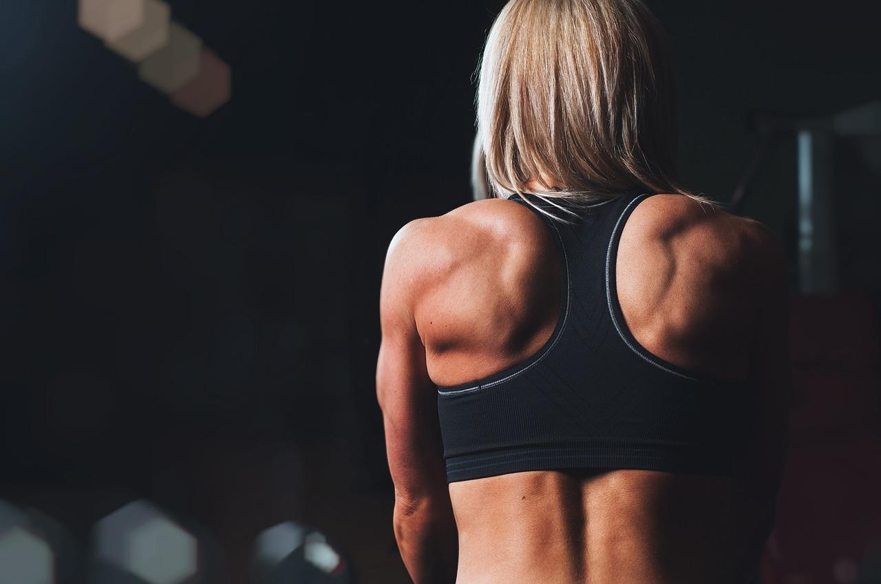 Façonner ses muscles avec des programmes de musculation