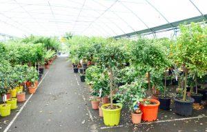 plantes-phares